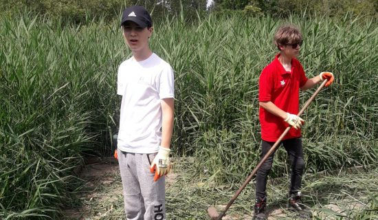 Two boys wearing tough gloves are standing in a sunny clearing of cut reeds. One is holding a rake.