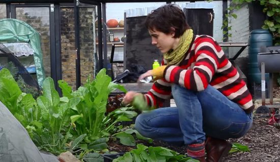 A young woman is crouching down to look at spinach growing in a vegetable bed.