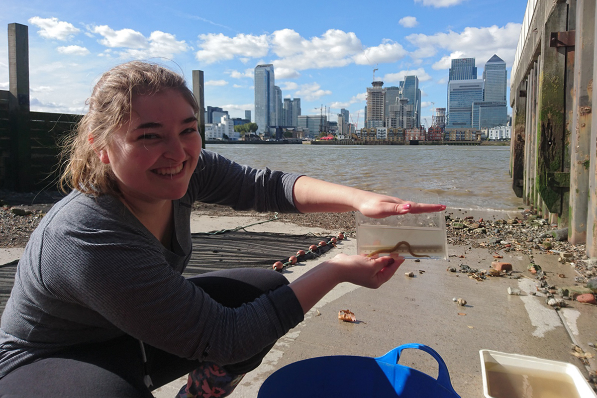 Thames Estuary Partnership intern Myriam Ibarra with baby eel caught in surveys at Point Wharf in Greenwich